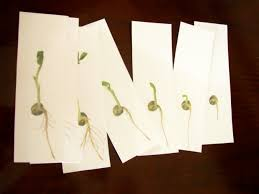 seed cards l is for learning page 3 the journey of a