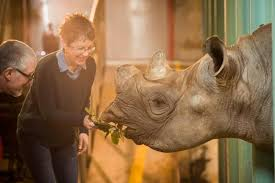 Oregon wildlife tours images Want to feed a rhino new tours go behind the scenes at zoo jpg