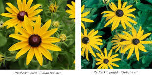 Garden Plants Names And Pictures by Plants Bellevue Nursery