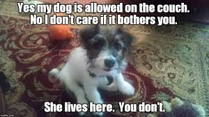 Yes This Is Dog Meme - yes my dog is allowed on the couch imgflip