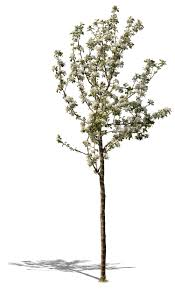 small tree of blossoms cut out plants vishopper