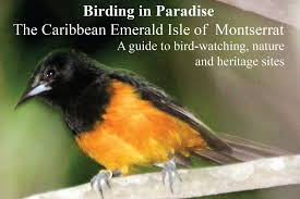 resources u2013 birdscaribbean