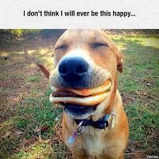 Be Happy Meme - animal meme gallery