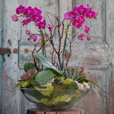 orchid arrangements 55 best orchid arrangements with succulents and driftwood decomagz
