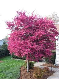 38 best trees shrubs images on shrubs beautiful and
