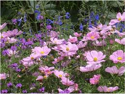 triyae com u003d purple backyard flowers various design inspiration
