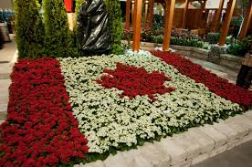 canada flowers canada blooms celebrates our country toronto