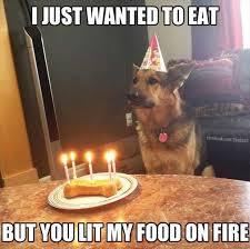 Funny Animal Birthday Memes - top funny birthday memes birthdaywishings com