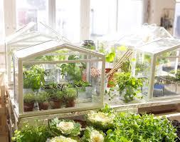 inside greenhouse ideas ikea socker indoor miniature greenhouse the green head