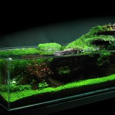 Most Beautiful Aquascapes The Green Machine Home Facebook