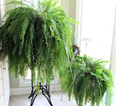 house plants that don t need light house plants that dont require a lot of light fooru me