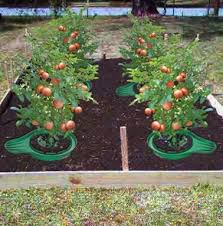 Garden Tips And Ideas 5 Beginners Tips To Gardening Gardening Guide Craft Like This
