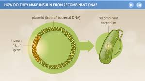 how did they make insulin from recombinant dna