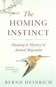best 25 instinct meaning ideas on pinterest meaning of instinct