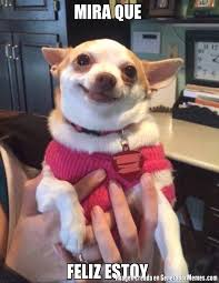 Meme Chihuahua - memes de chihuahua feliz galeria 10 imagenes graciosas