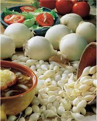 oignon blanc cuisine oignon blanc snowball willemse