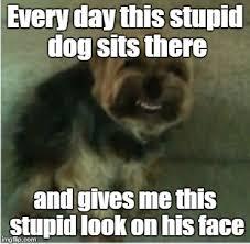 Stupid Animal Memes - i think this meme is back imgflip