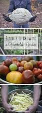 Growing Your Own Vegetable Garden by 171 Best Gardening Images On Pinterest Plants Flowers And Gardening