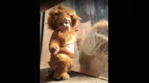 Baby Lion Costume Baby Dressed In His Lion Costume Bonds With A Real Lion Lifedaily