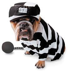 Pet Halloween Costumes Dogs 129 Halloween Images Animals Animal Costumes