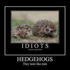 Hedgehog Meme - 7 best hegdehogs images on pinterest hedgehogs animales and baby