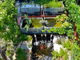nadika aquaponics indoor pond