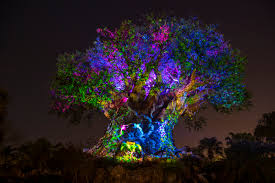 animal kingdom at what you need to touringplans