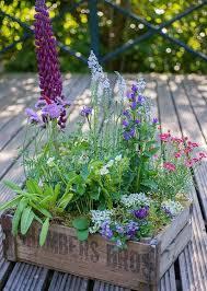 blumenkasten fã r balkon 17 best images about selber pflanzen on the smalls