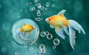 fish wallpaper 20 best free retina desktop wallpaper
