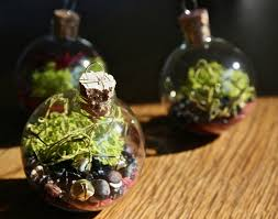 29 best terrarium love images on pinterest miniature gardens