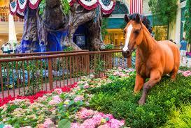 Botanical Gardens In Las Vegas Bellagio Hotel Conservatory Botanical Gardens Editorial Stock