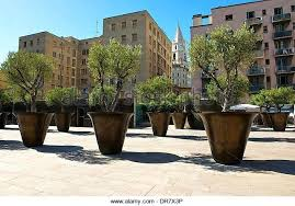 large planting pots large tree pots wholesale large trees