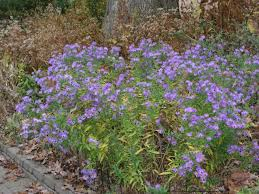 planting natives fall is a great time to plant trees and perennials especially
