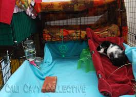 Cages For Guinea Pigs Cali Cavy Collective A Blog About All Things Guinea Pig Revy U0027s