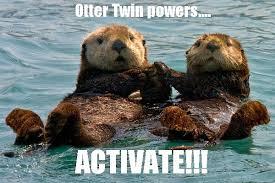 Sea Otter Meme - too funny otter spirit animal pinterest otters