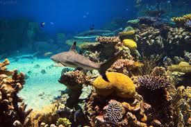 Nevada Snorkeling images Us aquariums where you can scuba dive or snorkel aquaviews jpg