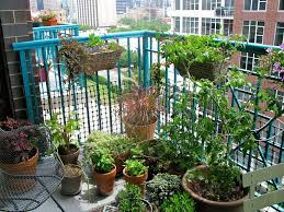 exteriors excellent balcony green plant wooden fence pallet