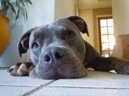 Becky U0027s Pet Care
