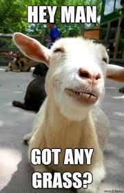 Billy Goat Meme - funny goat memes got grass w630
