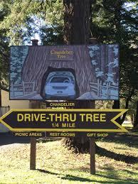 Chandelier Tree California Chandelier Tree A Clark Griswold Must See In California S Redwoods