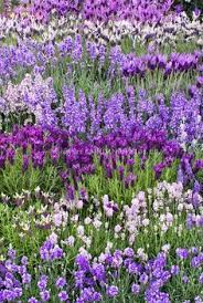 314 best purple flowers images on pinterest flowers garden