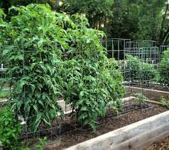 small plant supports the best diy tomato support growingagreenerworld com
