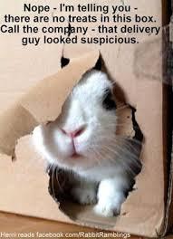 Funny Rabbit Memes - rabbit ramblings funny bunny memes furry friends pinterest