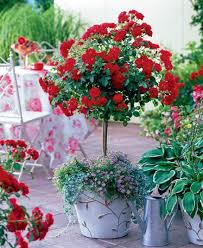 Flower Pot Arrangements For The Patio Small Rose Garden Growing Roses In Containers Balcony Patio
