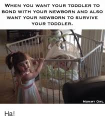 Toddler Memes - when you want your toddler to bond with your newborn and also want