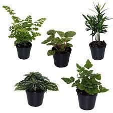 do it yourself plant terrarium kit