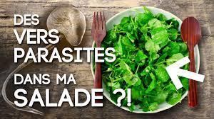 des vers dans ma cuisine des vers parasites dans ma salade la douve du foie fasciola