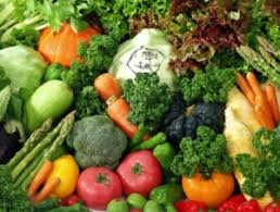 raw food diet evolutionary org