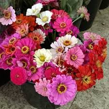 florist nashville tn import flowers florists 16 reviews 3636 murphy rd