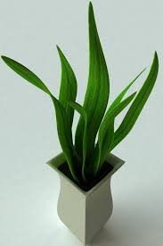3d model potted plant 2 cgtrader